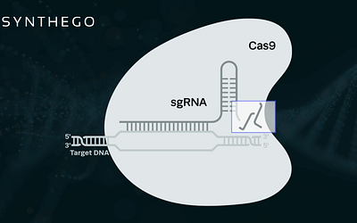 CRISPRoff: A New Technique for Light-Controlled CRISPR Gene Editing