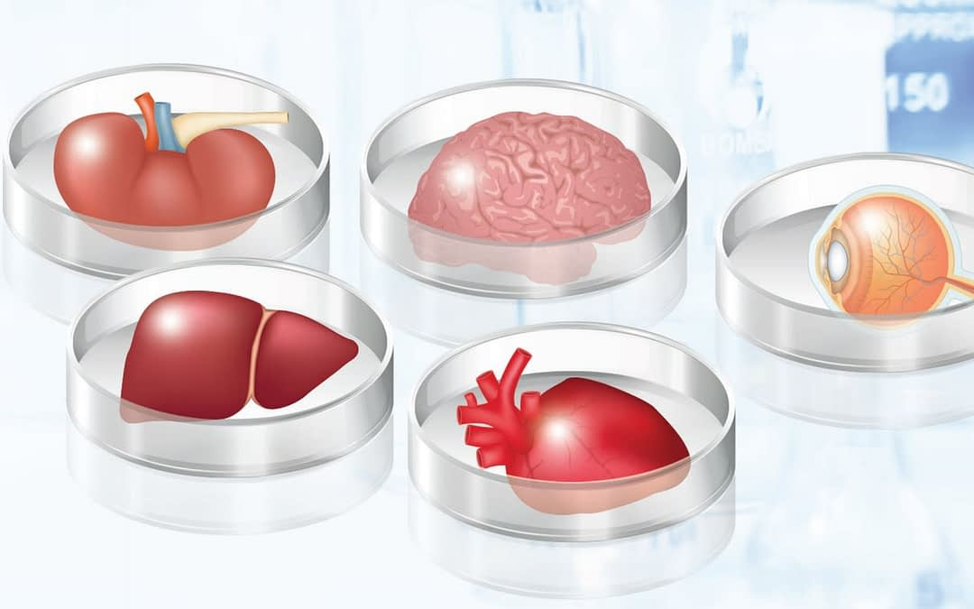 The Building Blocks for Organoid Research
