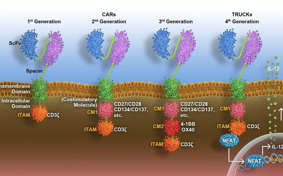CAR T-Cell Immunotherapy