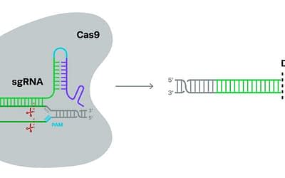 CRISPR: Knockouts For Loss-of-Function Experiments